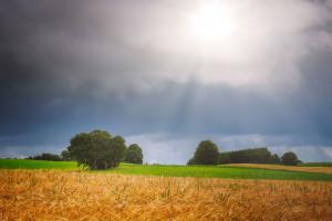 Principios clave de la salud del suelo